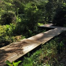 Zigzag Boardwalk and Skunk Cabbage at Bloedel Reserve Bainbridge Island 2