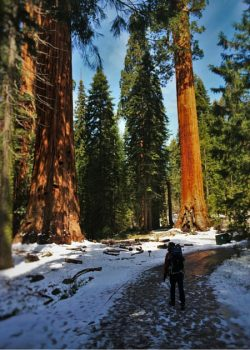 Chris Taylor hiking in Giant Forest in Sequoia National Park 2traveldads.com