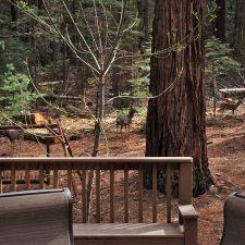 Deer-outside-John-Muir-House-at-Evergreen-Lodge-at-Yosemite-National-Park-1-225x225.jpg