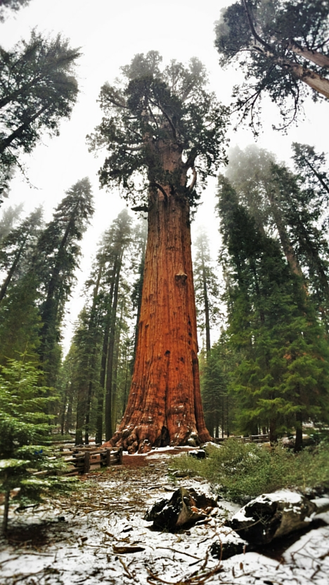 General Sherman tree in Sequoia National Park 2traveldads.com