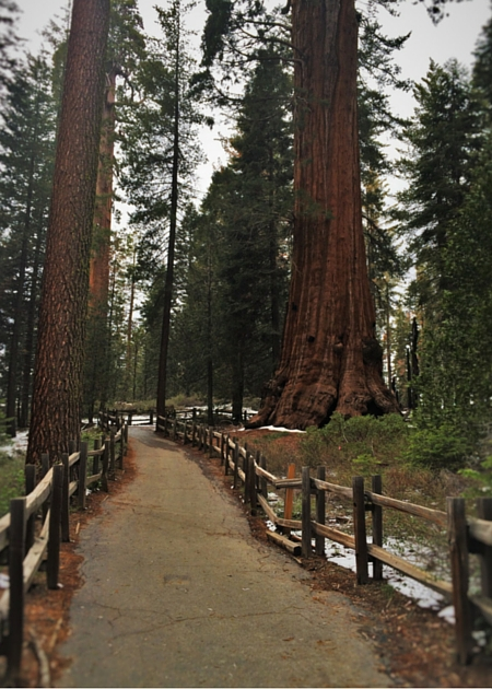 Hiking trail in Grant Grove Kings Canyon 2traveldads.com