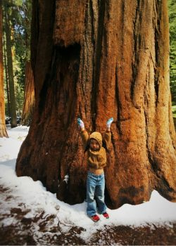 LittleMan and Giant Sequoia in Giant Forest in Sequoia National Park 2traveldads.com