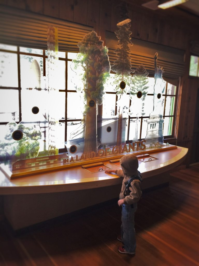 LittleMan and Sequoia exhibits in museum at in Giant Forest in Sequoia National Park 1