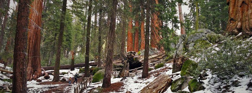 Rob-Taylor-hiking-in-Grant-Grove-header.jpg