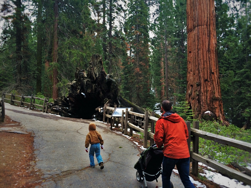 Taylor-Family-and-Fallen-Monarch-Kings-Canyon-National-Park-California-2traveldads.com_.jpg