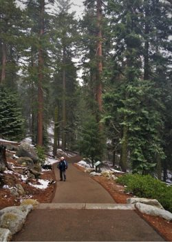 Trails and Giant Sequoias at General Sherman tree in Sequoia National Park 2traveldads.com