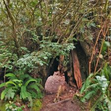 Gnome pathway in Redwood National Park California 2traveldads.com