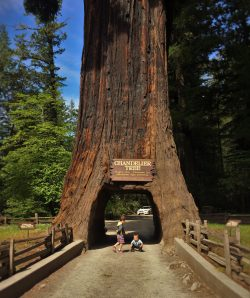 Taylor family at drive through redwood tree