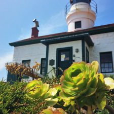 Succulents at Battery Point Lighthouse Crescent City 2