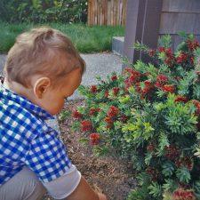 TinyMan and flowers at Bodega Bay lodge 2traveldads.com