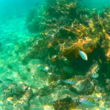 Tropical Reef and Fish Snorkeling in Akumal 1