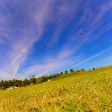 kites at Fort Casey Whidbey Island 1