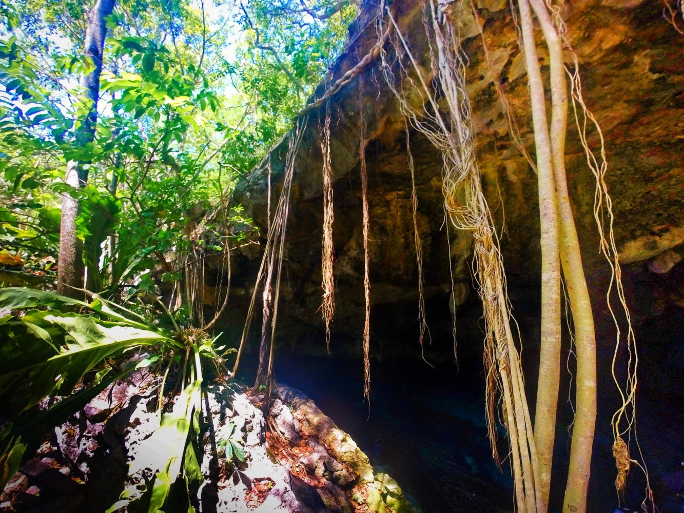 Roots growing over Mouth of Cenotes Dos Ojos Playa del Carmen Mexico