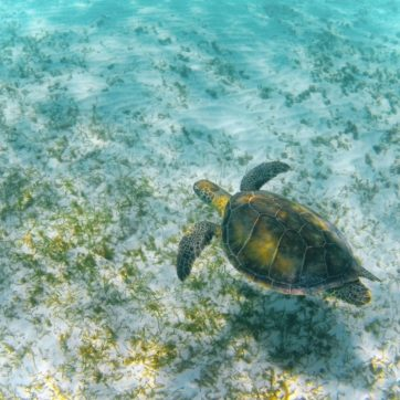 Trip to Playa del Carmen: a perfect destination for nature