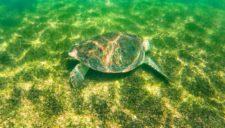 Sea-Turtle-in-Akumal-Mexico-2e-RT-1-225x128.jpg