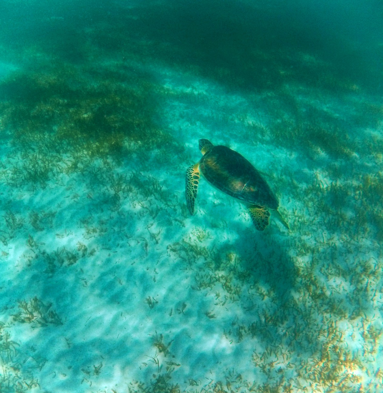 Swimming with Sea Turtles in Akumal 4