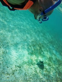 Snorkeling with Sting Ray in Akumal 3