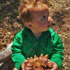 TinyMan with huge pinecone at Hetch Hetchy Yosemite National Park 1