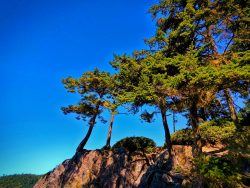 Trees on Cliffs at Deception Pass State Park Whidbey Island 1