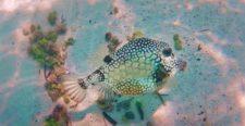 Tropical Reef and Fish Snorkeling in Akumal 3