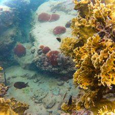 Reef while snorkeling in Labadee Haiti 1