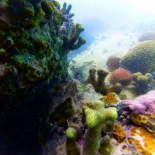 Reef while snorkeling in Labadee Haiti 2