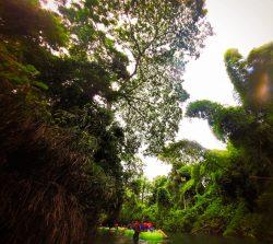 Floating the White River Ocho Rios Jamaica 3