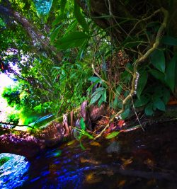 Jungle Plants while Floating the White River Ocho Rios Jamaica 2