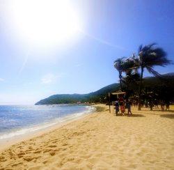Perfect white beach with palms in Labadee Haiti 2