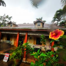 Hibiscus and Monsoon rain at Chukka Tour House Ocho Rios Jamaica 1