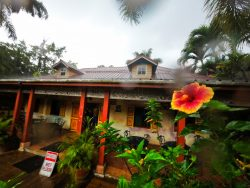 Hibiscus and Monsoon rain at Chukka Tour House Ocho Rios Jamaica 1