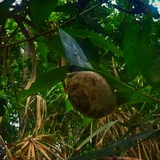 Snail on Tropical Plants and Monsoon rain at White River Ocho Rios Jamaica 1