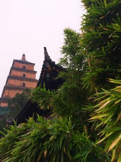 bamboo-and-buddhist-temple-at-giant-wild-goose-pagoda-2