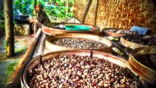 Drying Coffee in ndonesia ADare Photography