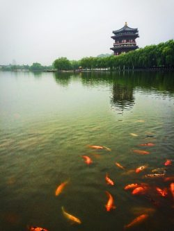 Ladies Hall pagoda at reflecting pond at Tang Paradise Xian Imperial Garden