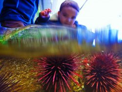 Taylor family at Port Townsend Marine Science Center 5