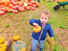 Taylor-kids-in-Pumpkin-Patch-Fall-Tradition-1-225x169.jpg