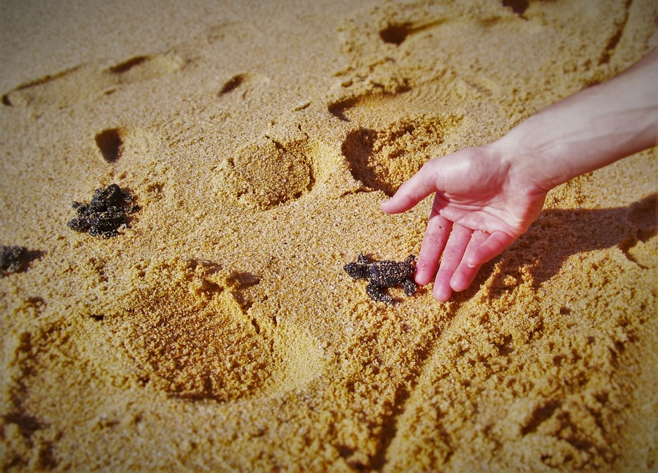 Baby-Turtles-Cabo-Mexico-1.jpg