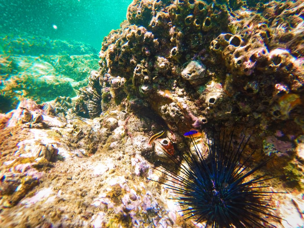 Colorful Urchins and Fish in Cabo Pulmo National Park
