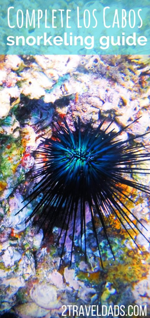 Complete guide to snorkeling in and around Cabo San Lucas, San Jose del Cabo, Cabo Pulmo National Park and more. Los Cabos family travel snorkeling guide. 2traveldads.com
