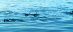 Dolphins from boat in Cabo San Lucas