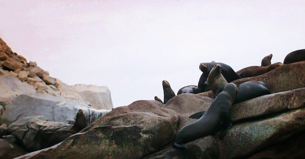 Sealion Colony at Cabo Pulmo National Park