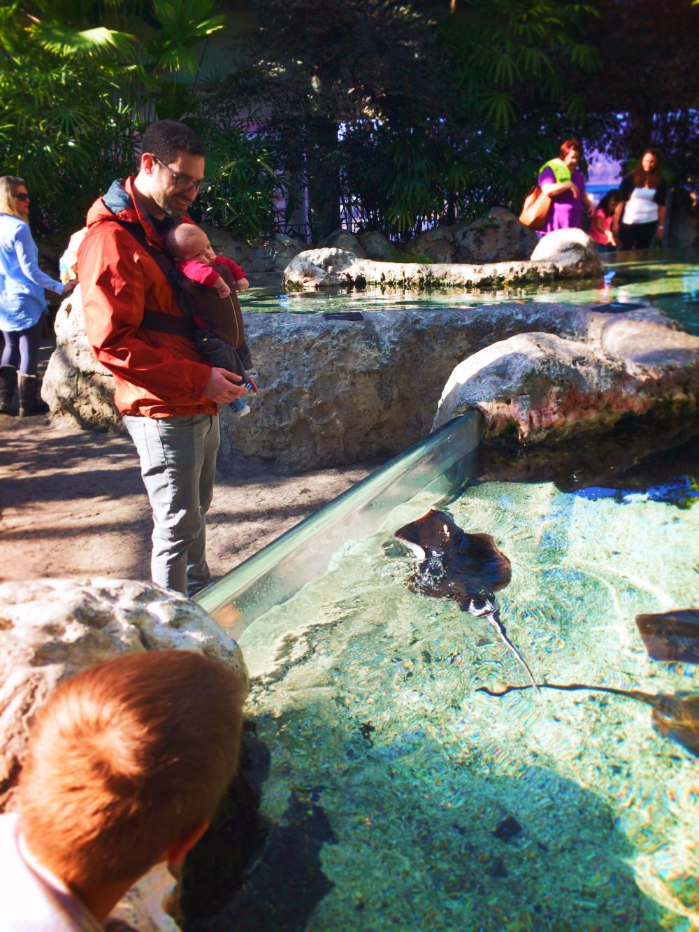 Chris Taylor at Stingray Touch Tank in Atrium at Tennessee Aquarium 1