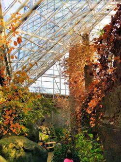 River-Journey-atrium-Tennessee-Aquarium-1-250x333.jpg