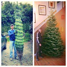 Taylor Family Christmas tree 2013