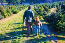 Hunting for the perfect Christmas tree is a wonderful holiday tradition, it supports local sustainable farms and creates lasting Christmas memories. 2traveldads.com