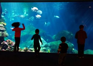 Taylor Kids at Ocean Journey Tennessee Aquarium 1