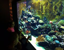 Taylor Kids at Secret Reef Tank Ocean Journey Tennessee Aquarium 1