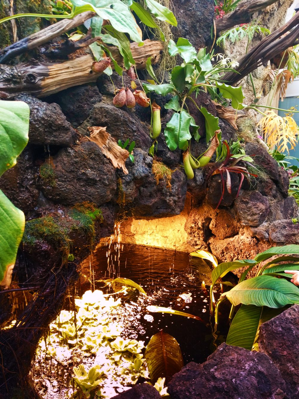 tropical waterfall in atrium at tennessee aquarium 1 2 travel dads