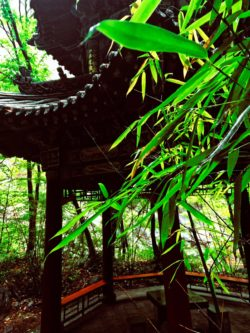 Buddhist Temples at Taibai Mountain National Park 6